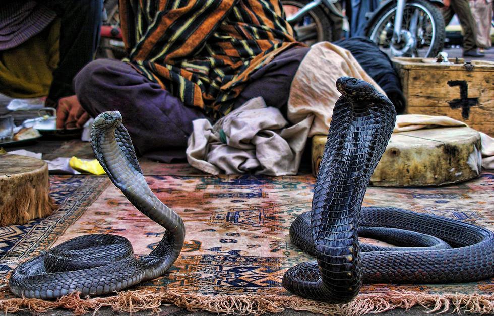 encantadores serpientes minube com